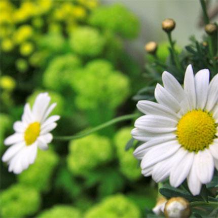 Blumen fritsch hochwertige pflanzen for Pflanzen lieferservice