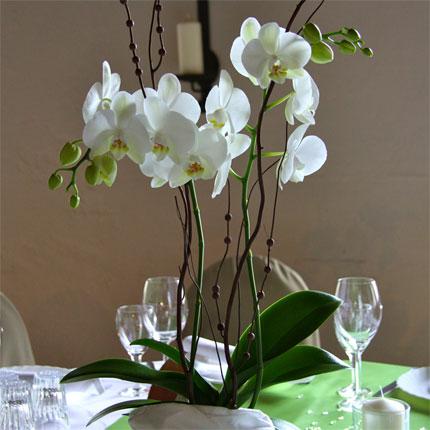 Tischdeko orchideen hochzeit innenarchitektur und m belideen - Tischdeko orchideen ...